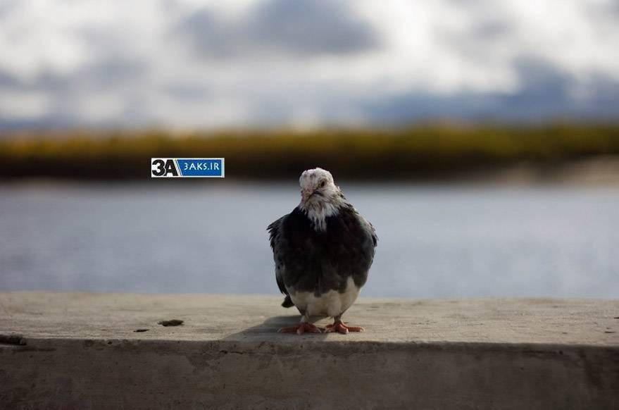 kabootar www.3aks.ir